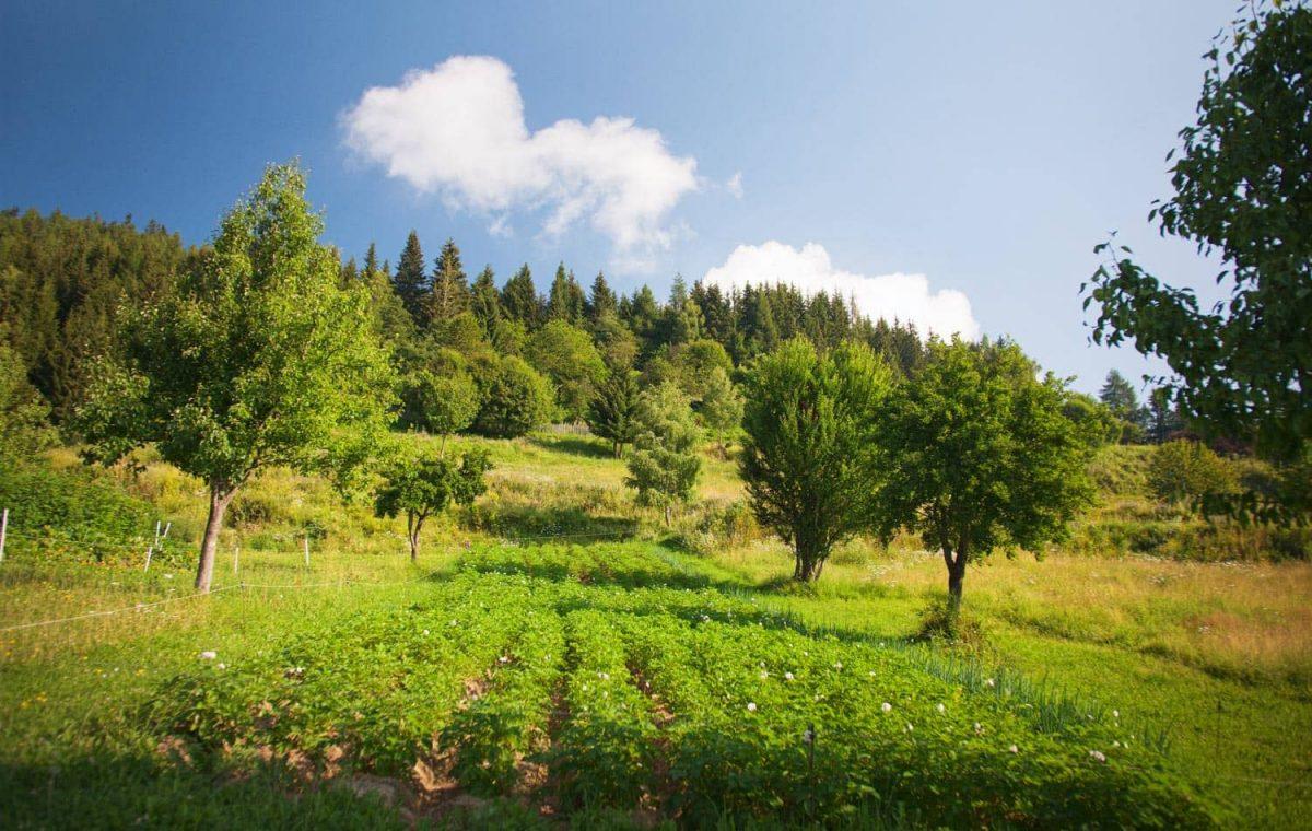 Holzer permaculture Krameterhof